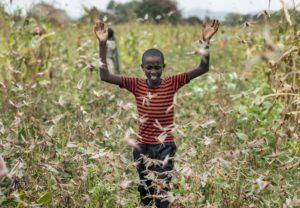 La piaga delle locuste in Africa